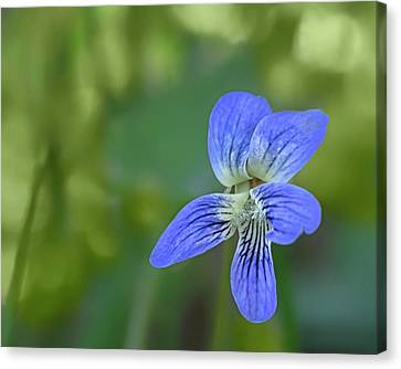 Downy Blue Violet Canvas Print by Nikolyn McDonald