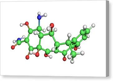 Doxycycline Antibiotic Molecule Canvas Print by Dr Tim Evans