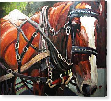 Draft Horse Canvas Print by Brian Simons
