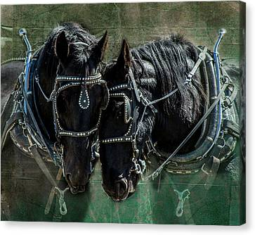 Canvas Print featuring the photograph Draft Horses by Mary Hone