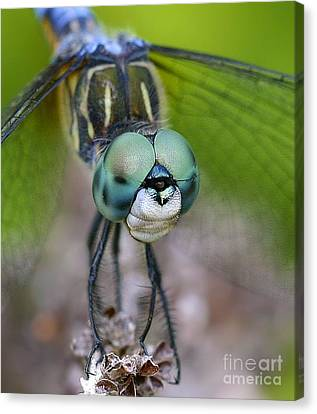 Canvas Print featuring the photograph Bug-eyed by Debbie Stahre