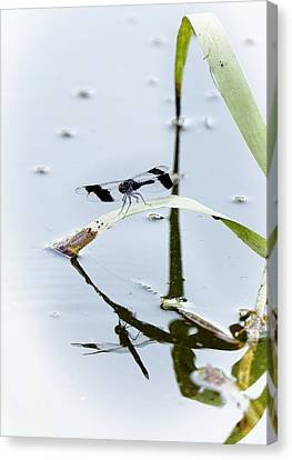 Dragon Fly Canvas Print by Patrick Kain