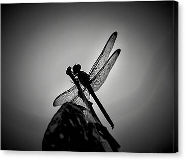 Dragon Fly Canvas Print by William Jones