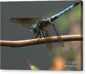 Dragonfly 2010 Canvas Print by Roxy Riou
