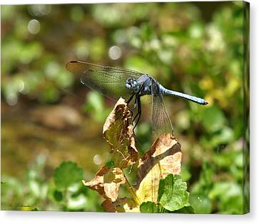Dragonfly Canvas Print by Arik Baltinester