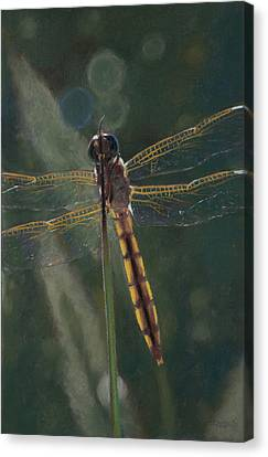 Dragonfly Canvas Print by Christopher Reid