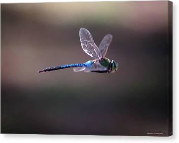 Panama City Beach Canvas Print - Dragonfly by Debra Forand