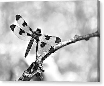 Dragonfly Dreams Canvas Print by Elizabeth Budd