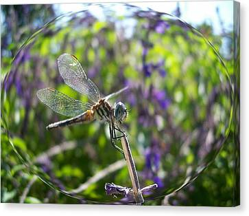 Dragonfly In Bubble Canvas Print