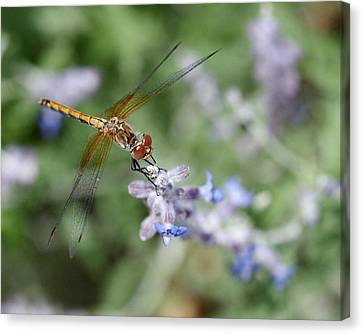Insect Canvas Print - Dragonfly In The Lavender Garden by Rona Black