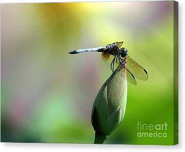 Dragonfly In Wonderland Canvas Print by Sabrina L Ryan