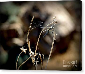 Dragonfly Canvas Print by Janille Jensen