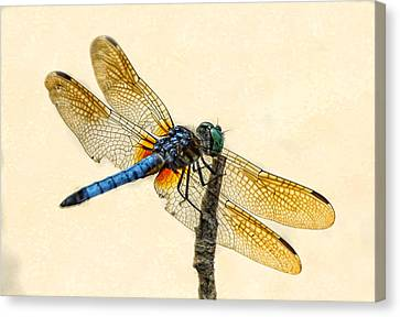 Dragonfly Canvas Print