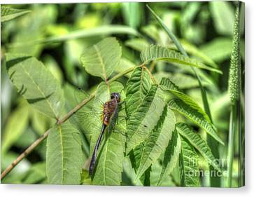Dragonfly Canvas Print by Jimmy Ostgard
