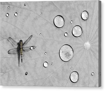 Water Drops Canvas Print - Dragonfly by Karl Manteuffel