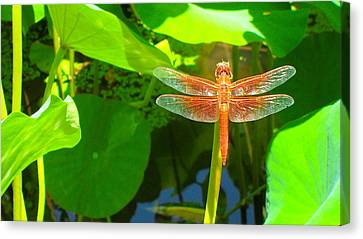 Dragonfly Canvas Print by Mark Barclay