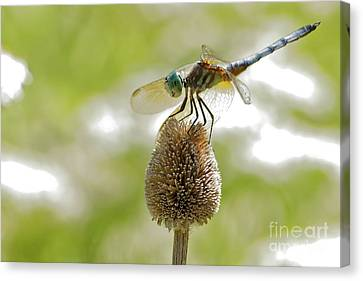 Canvas Print - Dragonfly by Natural Focal Point Photography