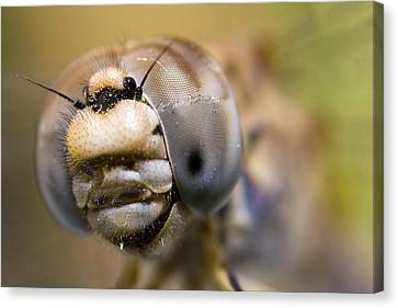 Dragonfly Portrait Canvas Print by Andre Goncalves