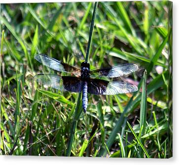 Dragonfly Resting Canvas Print by D Winston