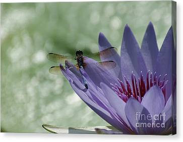 Dragonfly Resting On Purple Lily...   # Canvas Print