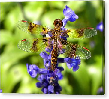 Canvas Print featuring the photograph Dragonfly by Sandi OReilly