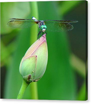 Dragonfly Va 1 Canvas Print