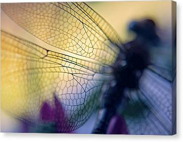 Dragonfly Wings Canvas Print by Susan Leggett