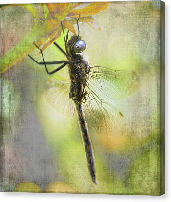 Dragonfly Resting - Textured Canvas Print