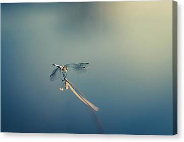 Canvas Print featuring the photograph Dragonlady by Shane Holsclaw