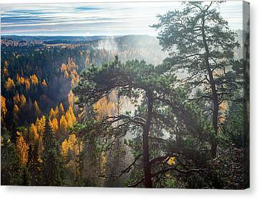Dramatic Autumn Forest With Trees On Foreground Canvas Print