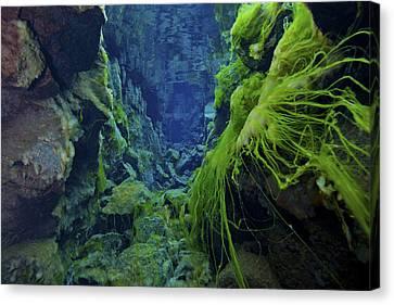Dramatic Fluorescent Green Algae Canvas Print by Mathieu Meur