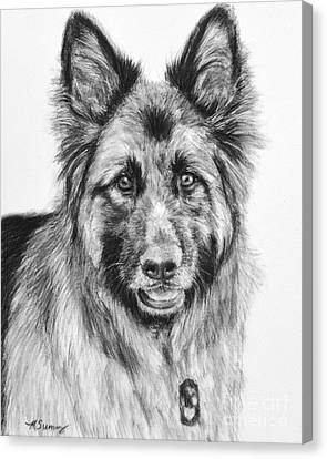 Drawing Of A Long-haired German Shepherd Canvas Print