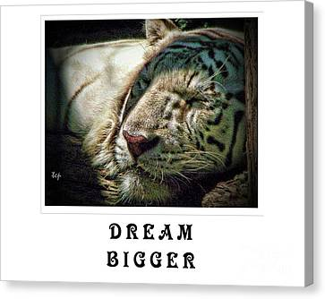 Canvas Print featuring the photograph Dream Bigger by Traci Cottingham