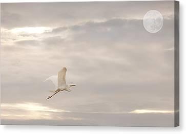 Canvas Print featuring the photograph Dream Dream Dream by Gouzel -