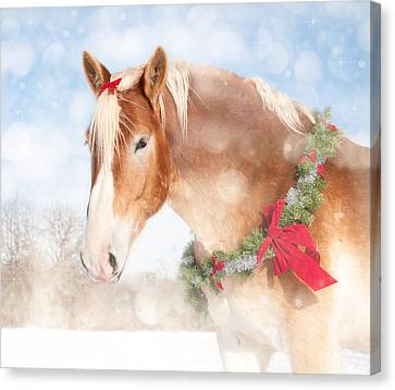 Dream Of A Gift Horse Canvas Print