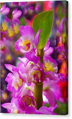 Canvas Print featuring the photograph Dream Of Spring by Byron Varvarigos