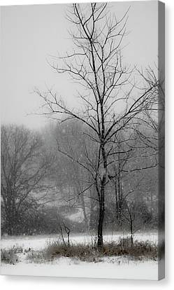 Dream Of Winter Canvas Print by Gwen Vann-Horn