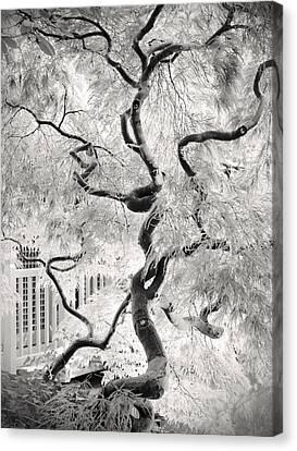 Dream Tree Canvas Print by Dorit Fuhg