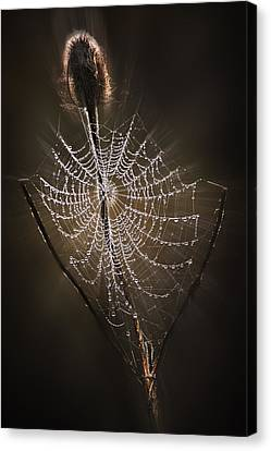 Dream Catcher Gallery Canvas Print - Dreamcatcher by John Christopher