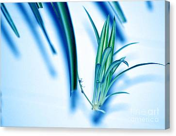 Canvas Print featuring the photograph Dreaming Abstract Today by Susanne Van Hulst
