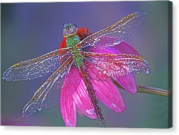 Dreaming Dragon Canvas Print by Bill Morgenstern
