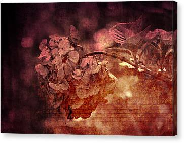 Dreaming Hortensia Canvas Print