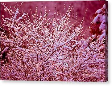Canvas Print featuring the photograph Dreaming In Red - Winter Wonderland by Susanne Van Hulst