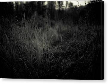 Canvas Print featuring the photograph Dreaming In by Shane Holsclaw