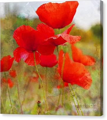 Rememberance Canvas Print - Dreaming Of A Summer Gone by Clare Bevan