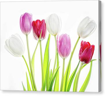 Canvas Print featuring the photograph Dreaming Of Spring by Rebecca Cozart