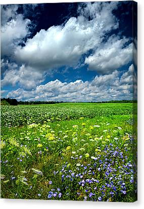 Dreaming Of Summer Canvas Print by Phil Koch