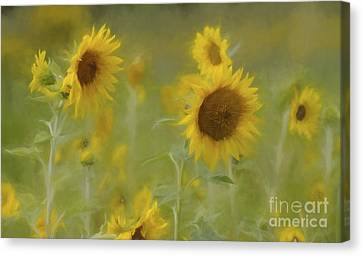 Canvas Print featuring the photograph Dreaming Of Sunflowers by Benanne Stiens
