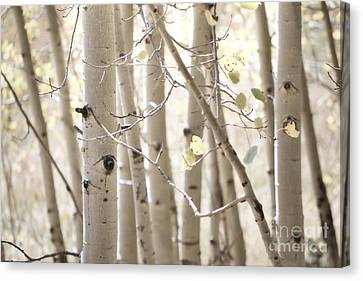 Dreamy Aspen Woodland Canvas Print by Andrea Hazel Ihlefeld