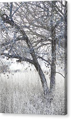 Canvas Print featuring the photograph Dreamy Bosque Tree by Andrea Hazel Ihlefeld